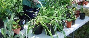 Plant sale - MartinT - detail